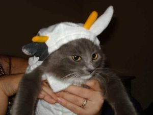 cat-dentist